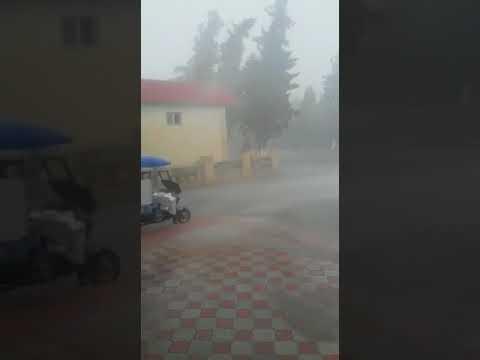 Ucar rayonunda leysan yagiwlarin qurbanina cevrilen miravi-:d