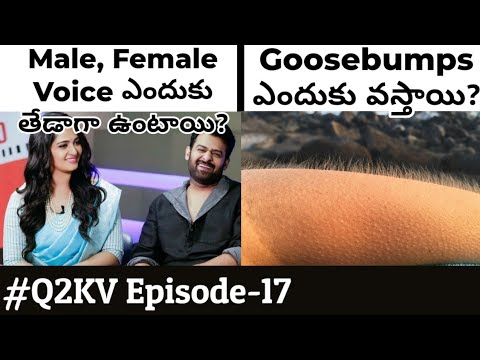 Top 10 Interesting and Unknown facts in Telugu | #Q2KV Episode-17 | KranthiVlogger