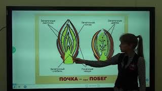 Урок Биология (МЭШ)