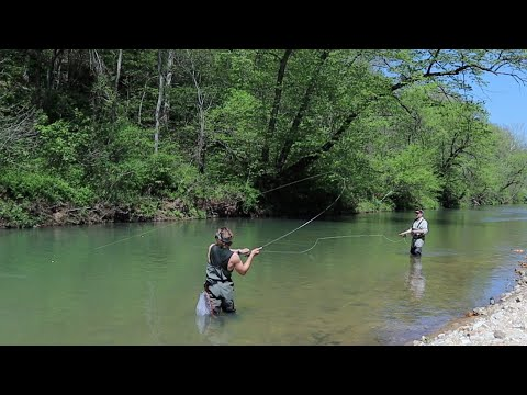 MISSOURI OZARK MOUNTAINS: THIS WATER IS AMAZING (Fly Fishing Little Piney & Lane Springs, Rolla MO)
