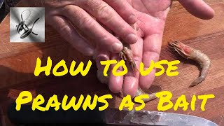 How to use Prawns as bait | The Hook and The Cook