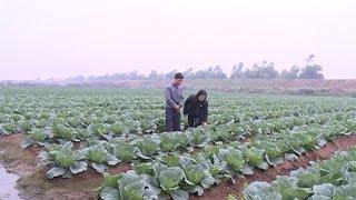 Nam Sách sẵn sàng nguồn nông sản, thực phẩm cho Tết Nguyên đán