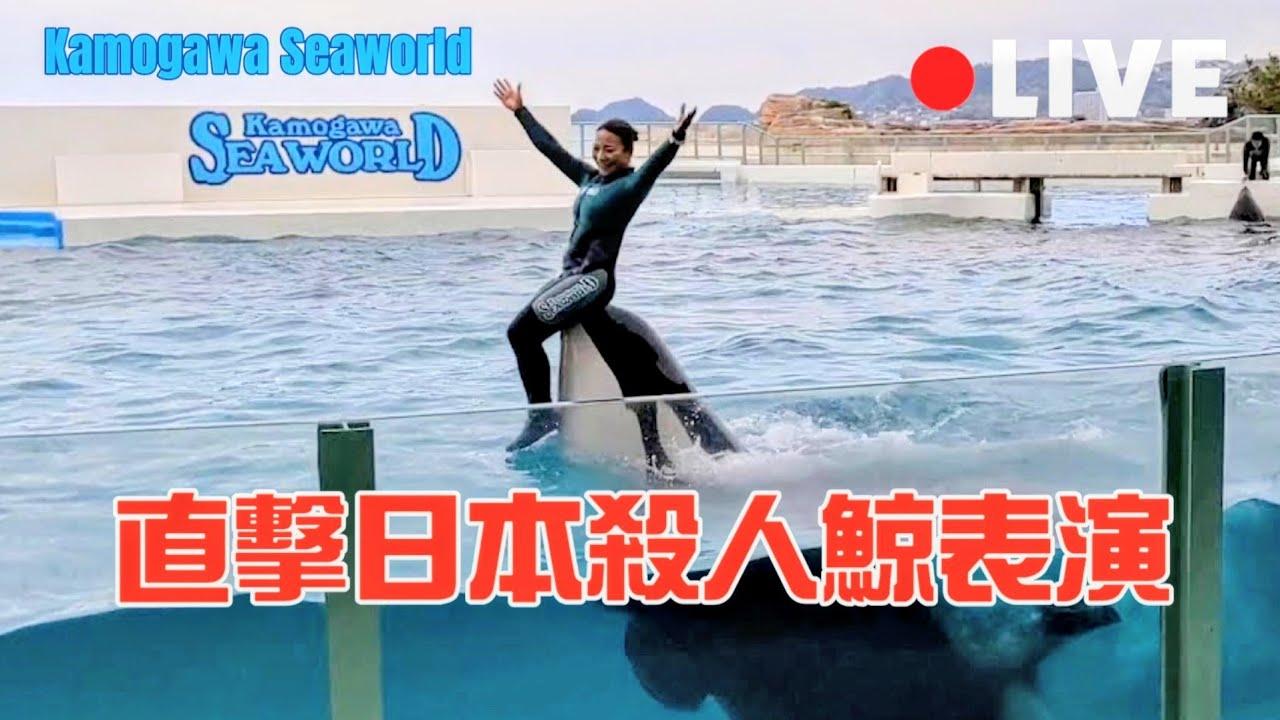 鴨川海洋世界Kamogawa Seaworld-海洋霸主殺人鯨(虎鯨)開場表演 - YouTube