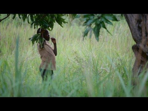 In Kony's Shadow - Norman Okello's story