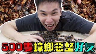 【惡整】500隻蟑螂恶整慶祝好友的生日! 結果好友的反應驚人! 【Ft AnimaJinx 傅長膨】【Ft Rocket Man 火箭】