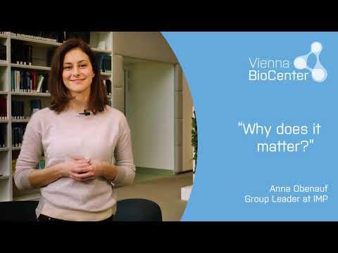 Anna Obenauf | IMP - Research Institute Molecular Pathology