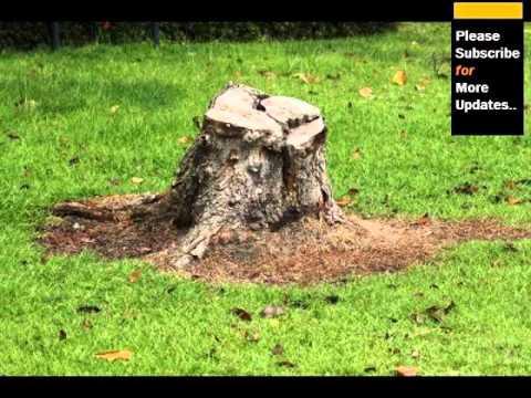 Gallery Of Tree Stump