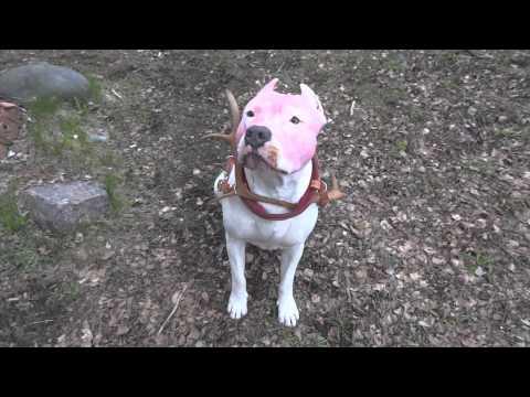 Clash of Clans: Dog karaoke contest