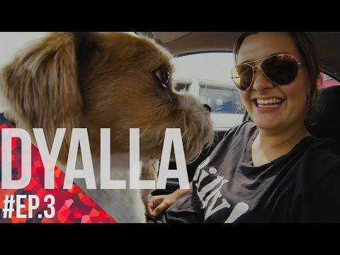 Feel the Vibe with DYALLA #Ep.3 - How Casey Neistat changed her life [New Zealand]