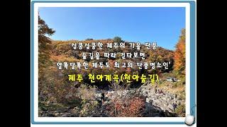 [제주도가볼만한곳] 심쿵심쿵한 제주의 가을 단풍, 숲길…