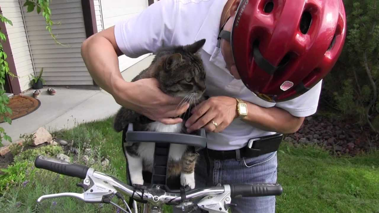Mozart S First Ride On The Buddyrider Bicycle Pet Seat Youtube