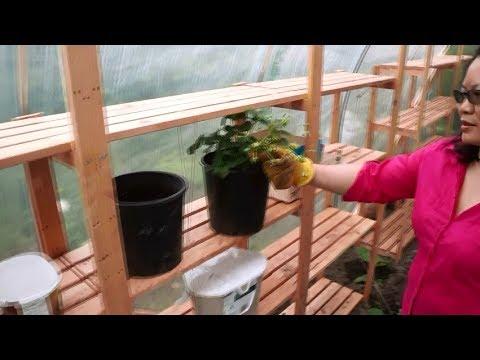 Growing vegetables, diy greenhouse update