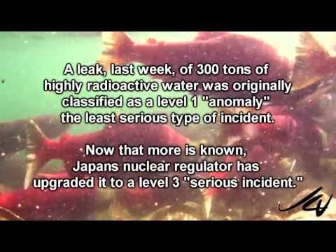 2013 Sockeye Salmon Run - British Columbia Canada  -  YouTube