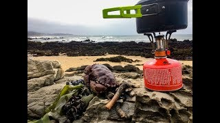 Coastal foraging: Making seafood chowder + weird giant sea creature
