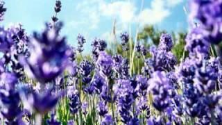 Antonio Vivaldi - 4 seasons (4 saisons) - Summer
