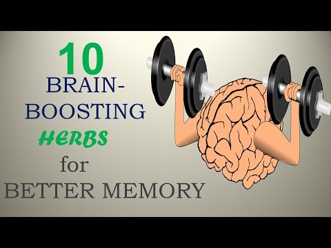10-brain-boosting-herbs-for-better-memory---nature-care-2017