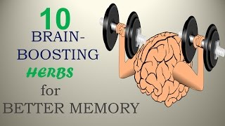 10 Brain-Boosting Herbs for Better Memory - Nature Care 2017