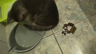 Кот заметает следы