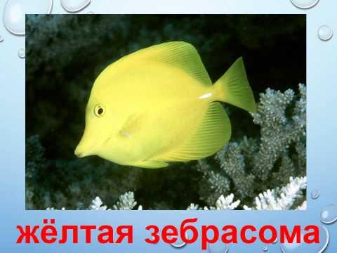 Презентация для детей по Доману. Рыбы
