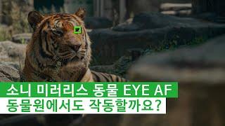 [소니 미러리스] 동물 EYE AF, 과연 동물원에서도…