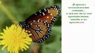 Урок бабочки .Притча.