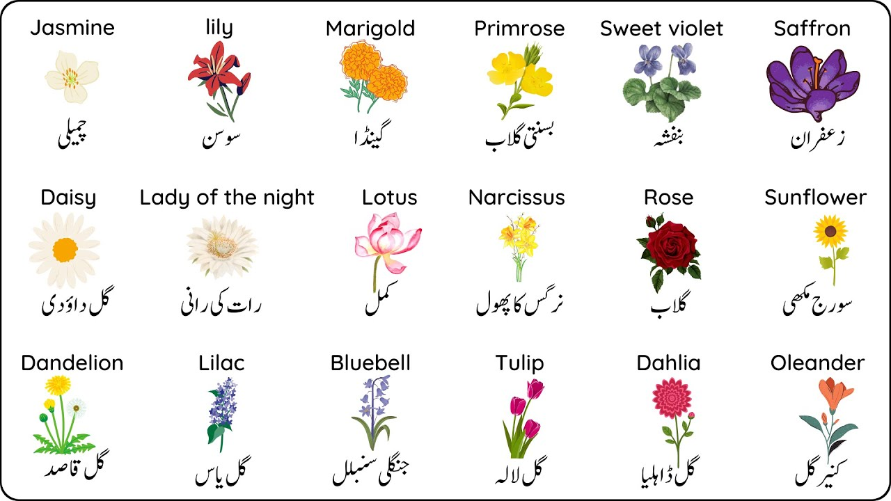 Flower Names In English And Urdu With Pictures Learn English Vocabulary Youtube