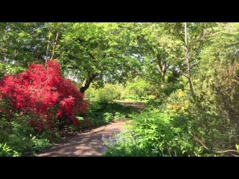 Wisley Garden, RHS