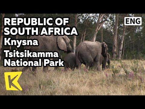 【K】South Africa Travel-Knysna[남아공 여행-나이스나]치치캄마 공원, 사바나/Tsitsikamma National Park/Savanna/Maritime