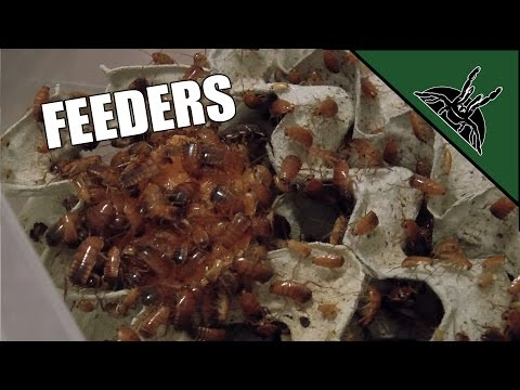 The FEEDERS I use for my animals