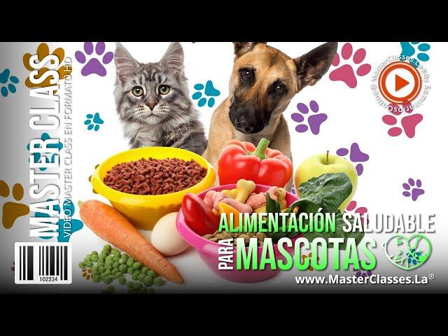 Alimentación Saludable para Mascotas - Llena de salud y amor a tus peludos.