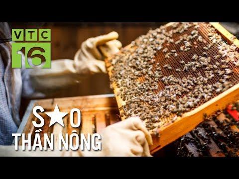 Triệu phú nuôi ong mật, đi lên từ nghèo túng | VTC16