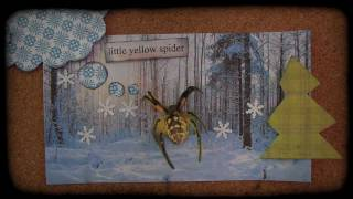 Little Yellow Spider.