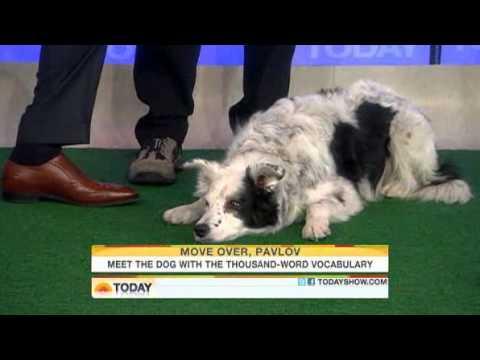 Meet Chaser, the canine Einstein!