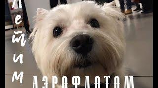 Летим с собакой в Сибирь авиакомпанией Аэрофлот