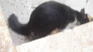 le sex des chat 2012 regardé
