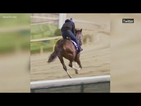 Horse Dies On Track At Churchill Downs