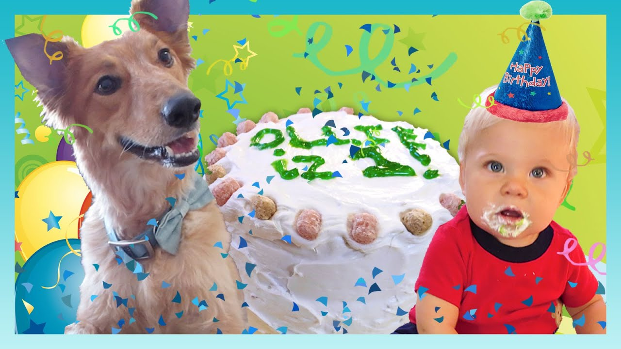 Download BELATED BIRTHDAY BOY!   Look Who's Vlogging: Daily Bumps