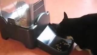 Большая автоматическая кормушка для собак и кошек с ЖК-дисплеем(Купить автокормушку можно в интернет-магазине