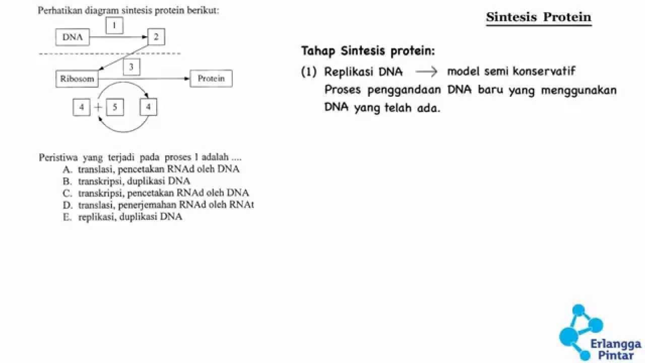 Biologi sma sintesis protein youtube biologi sma sintesis protein ccuart Images