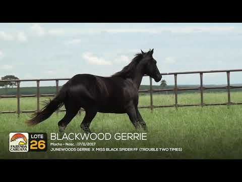 LOTE 26 - BLACKWOOD GERRIE