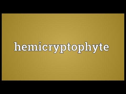 Hemicryptophyte Meaning