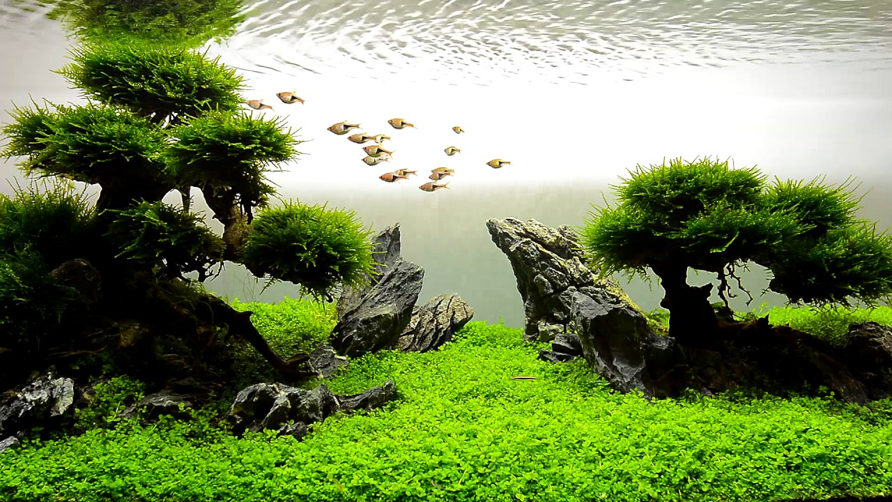 JBL AQUASCAPING - YouTube
