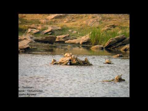 Rajasthan Wildlife Safari