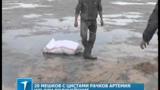 20 мешков с цистами рачков артемия изъяли полицейские в Кокшетау