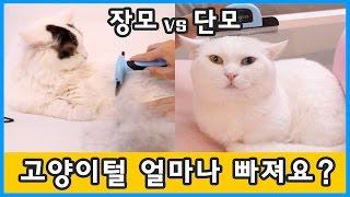 고양이 털 얼마나 빠져요? 장모 vs 단모