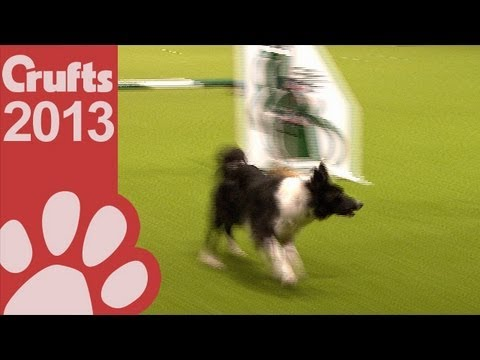 Agility - Jumping - Large Dogs Winner Crufts 2013