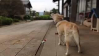 歌う犬(singing dog) 投稿:辻田将信(Masanobu Tsujita) →https://plu...