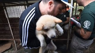 103 Puppies and Dogs Rescued From Dog Meat Farm in South Korea!