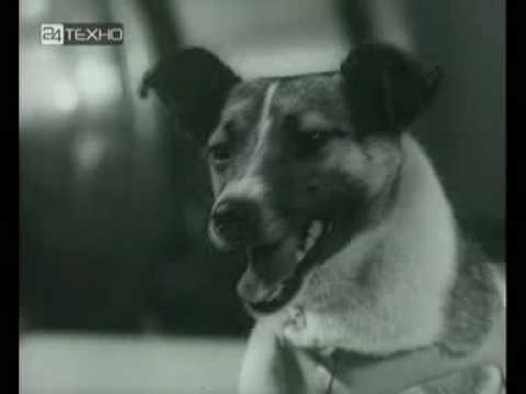 23 факта о первом космонавте в истории - собаке Лайке, герое Советского Союза