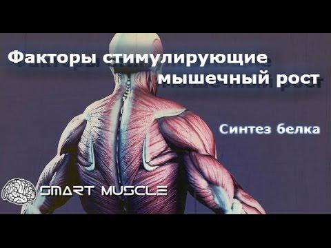 Факторы стимулирующие мышечный рост